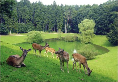 1-Freigehege Wildpark Schwarze Berge